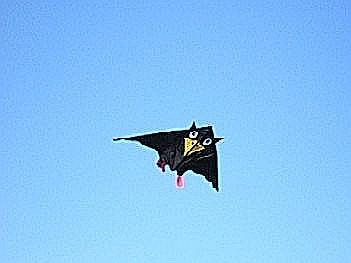 delta-kite-rudi4