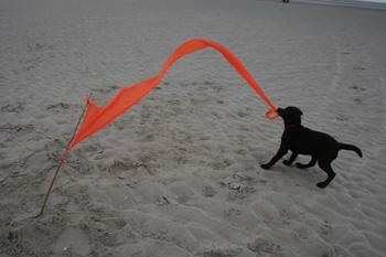 Orangener Wind3